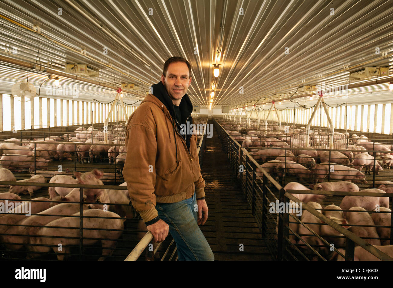 Agriculture - A pork producer poses in his hog confinement facility / Central Iowa, USA. - Stock Image