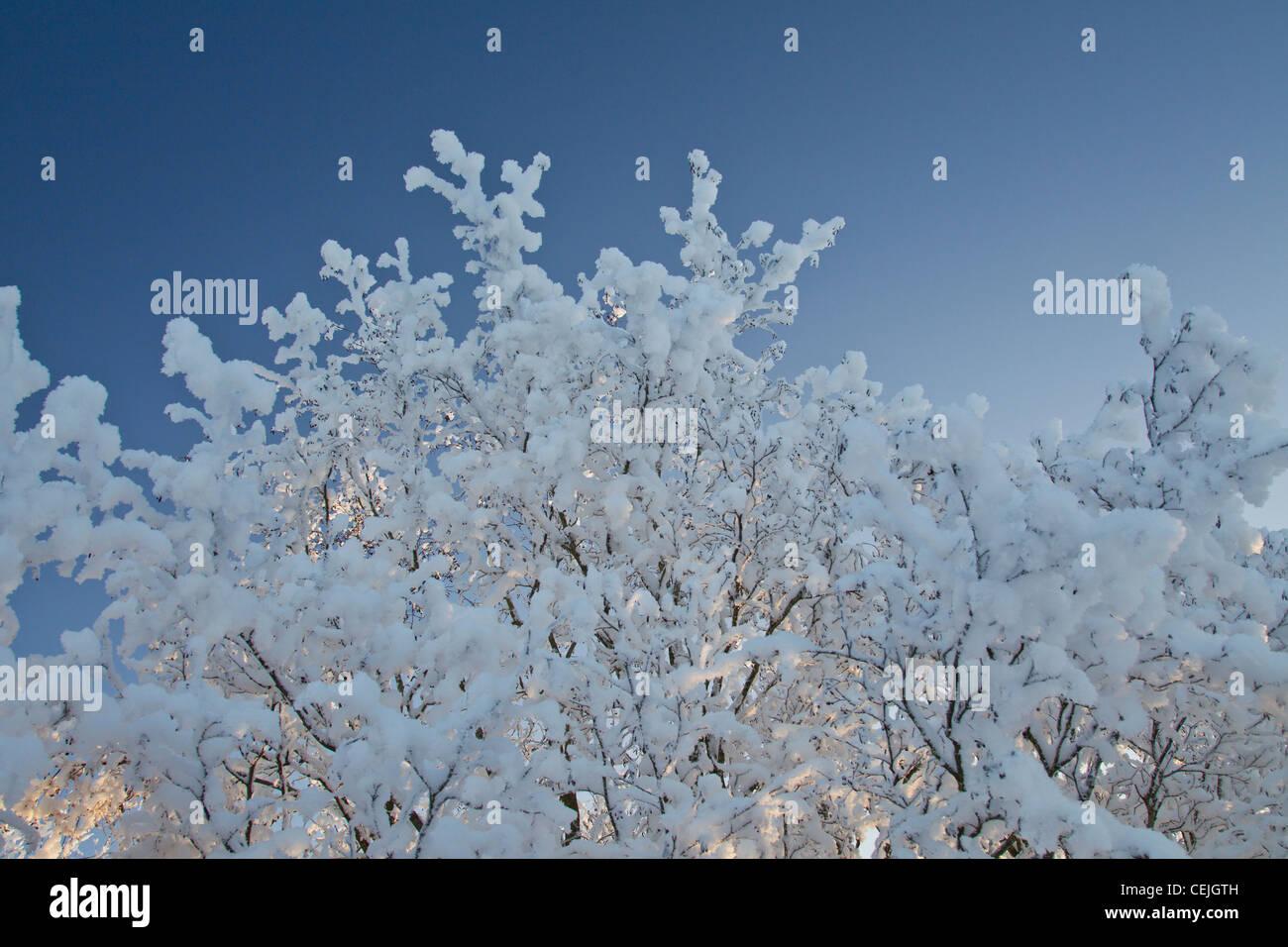 winterfoto, winter photo Stock Photo