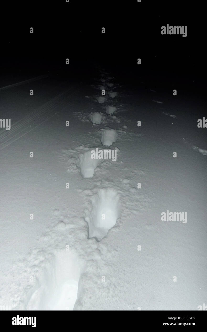 Footprints in snow leading into darkness - Stock Image