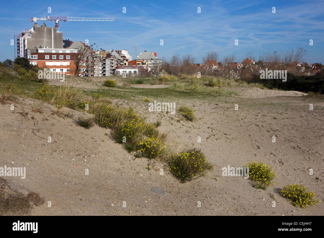 Dunes and advancing urbanization by building apartments along the Belgian North Sea coast, Knokke, Belgium - Stock Image
