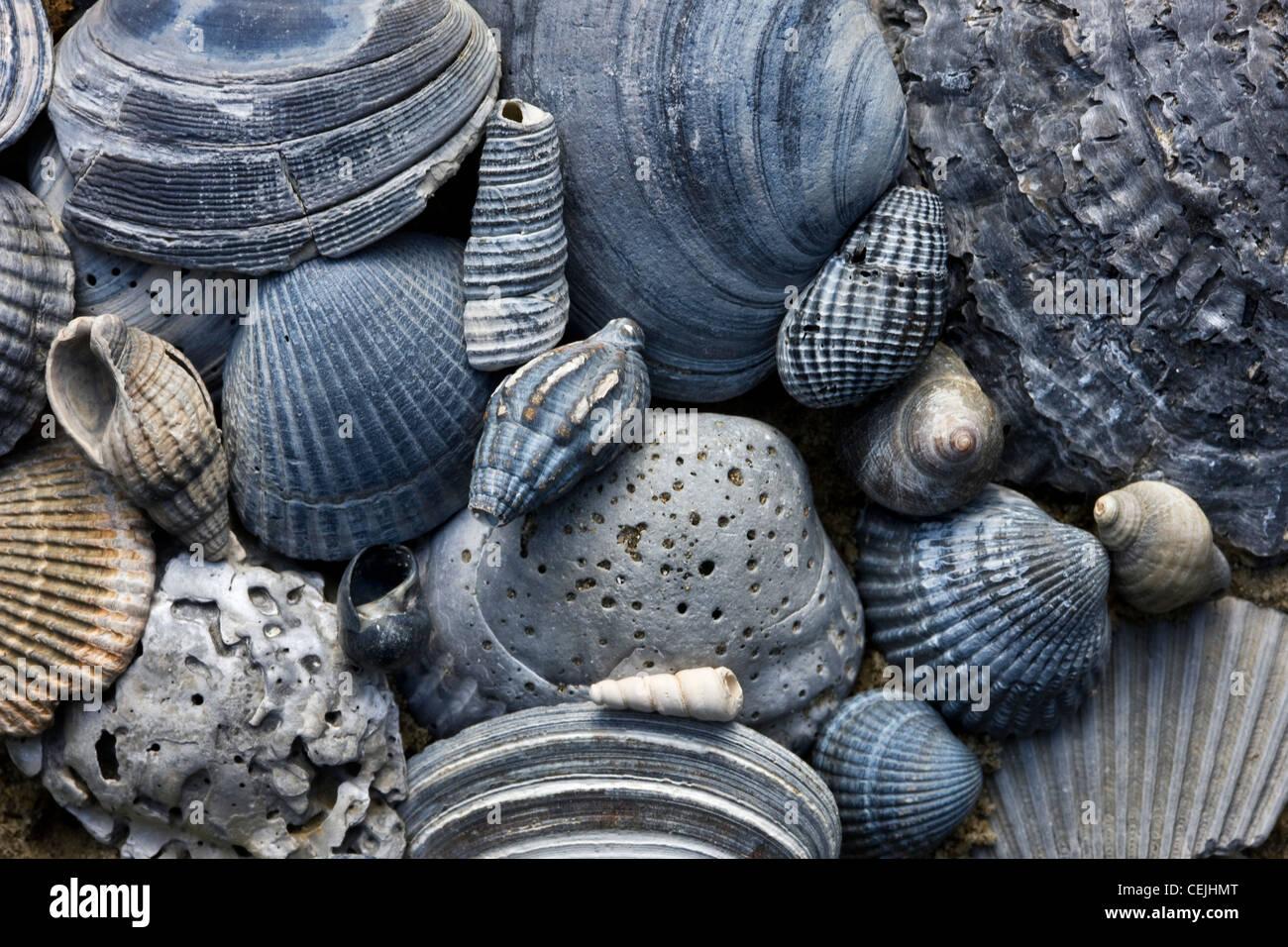 Fossilized Shells Stock Photos & Fossilized Shells Stock Images - Alamy
