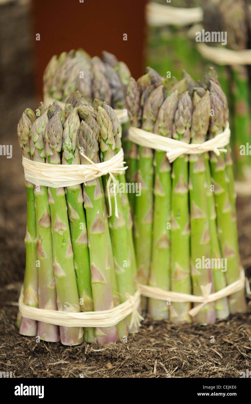 Chelsea Flower Show, Royal Horticultural Society, London, Still life image of cut bunches of asparagus tied natural - Stock Image