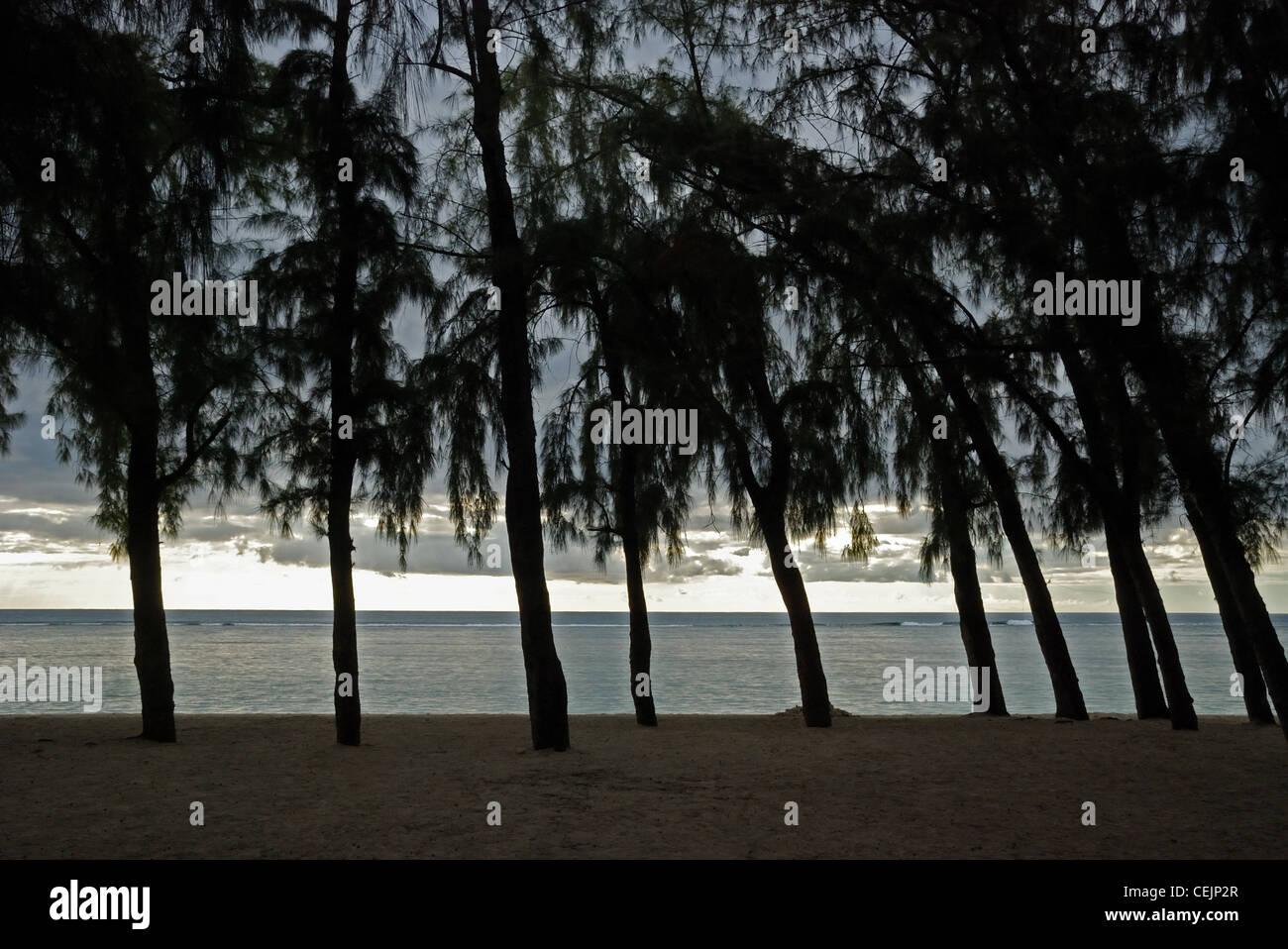 Flic En Flac beach with casuarina trees. Mauritius. - Stock Image