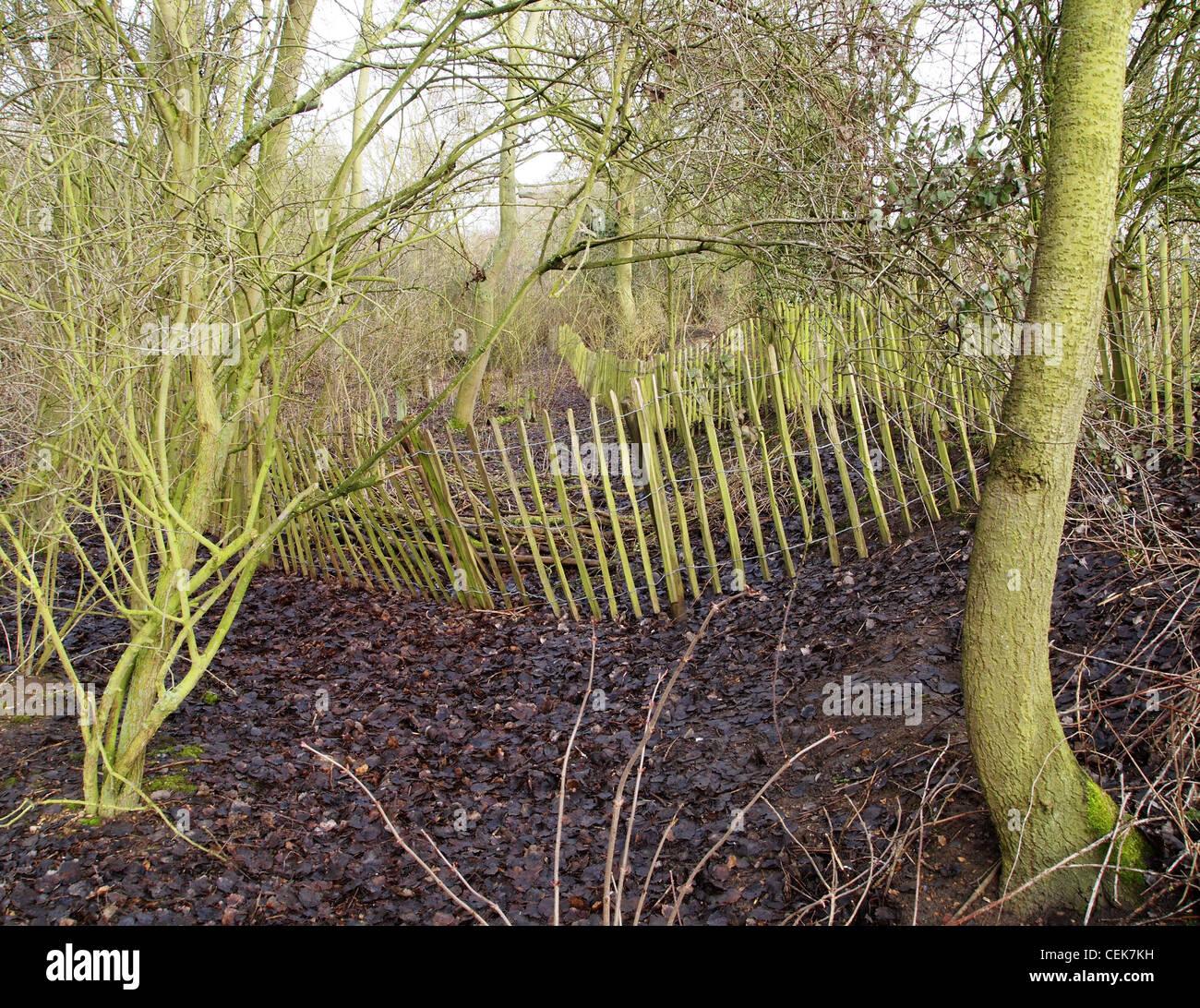 woodland fence - Stock Image