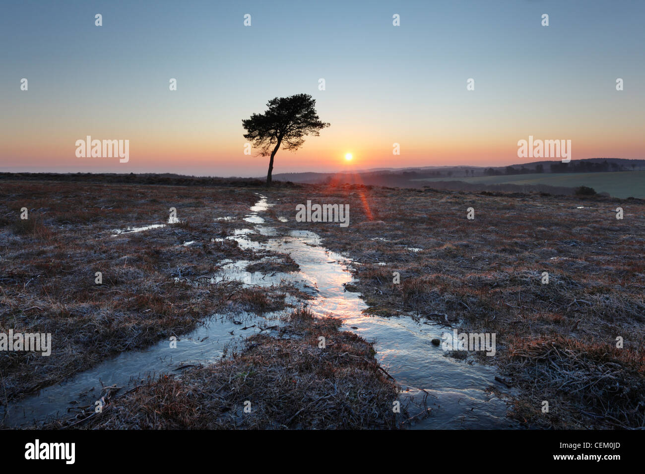 Winter Sunrise on Black Hill. The Quantock Hills. Somerset. England. UK. - Stock Image