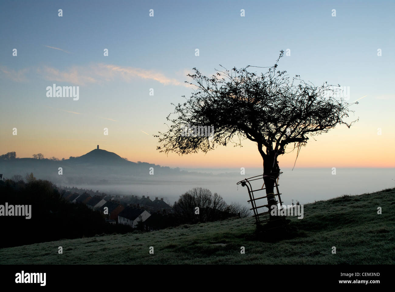 Glastonbury Tor and Holy Thorn at sunrise in winter - Stock Image