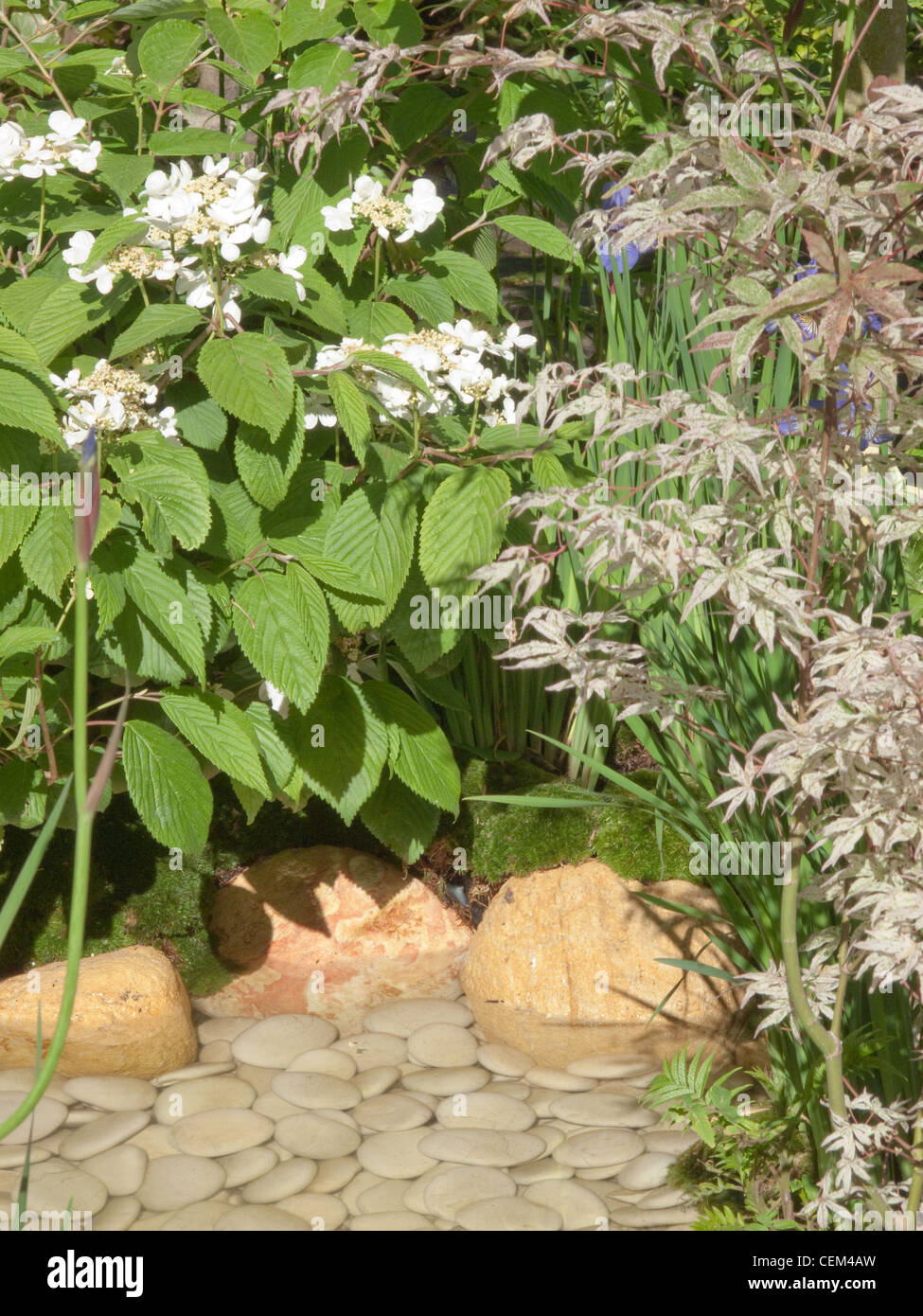 oyal Horticultural Society Chelsea Flower Show in London Lacecap hydrangeas set beside small, shallow pool decorated - Stock Image