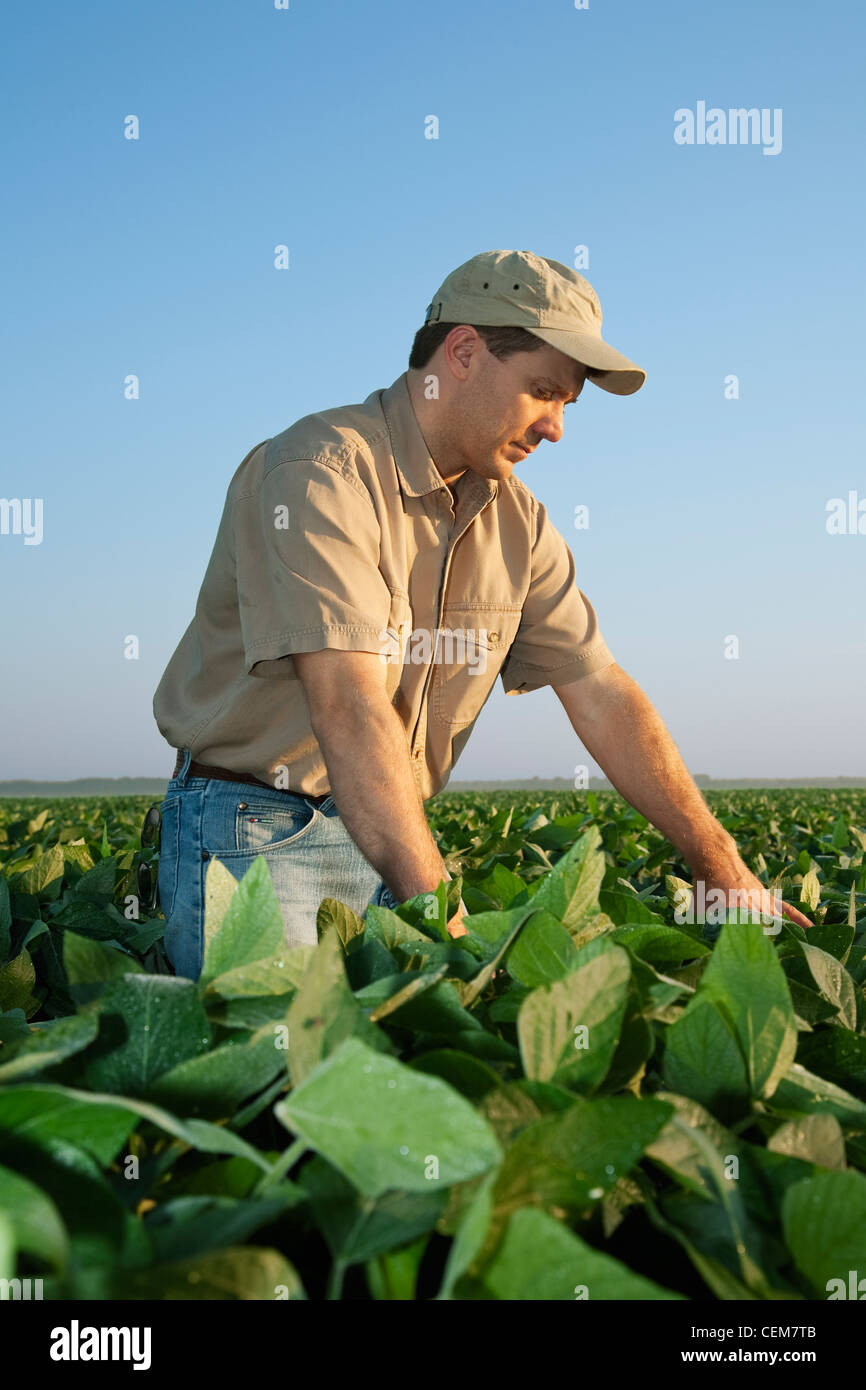 A Farmer (grower) Examines His Mid Growth