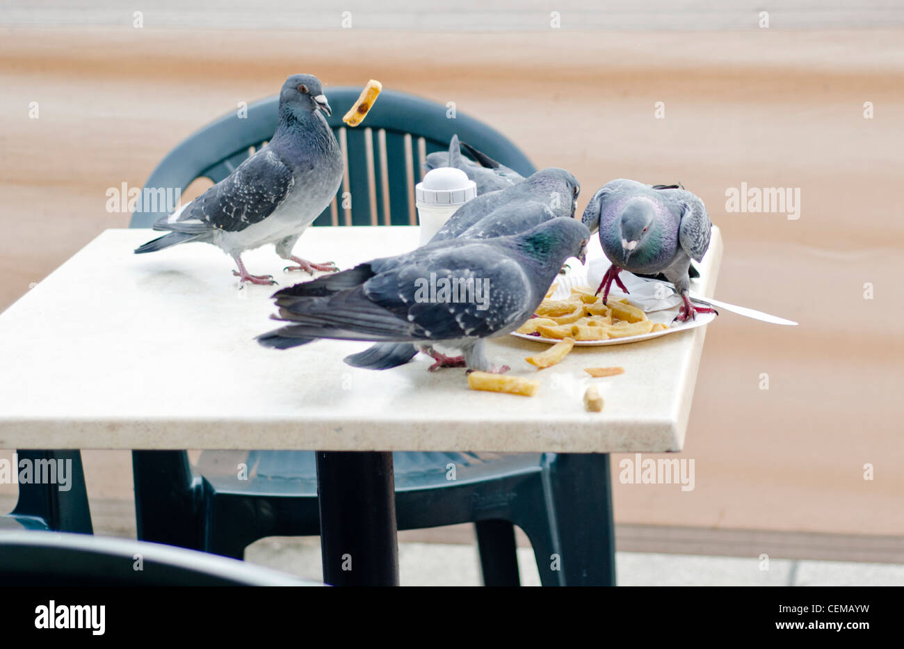 Pigeons scavenging leftover chips and other food from a table outside a cafe in the UK. - Stock Image