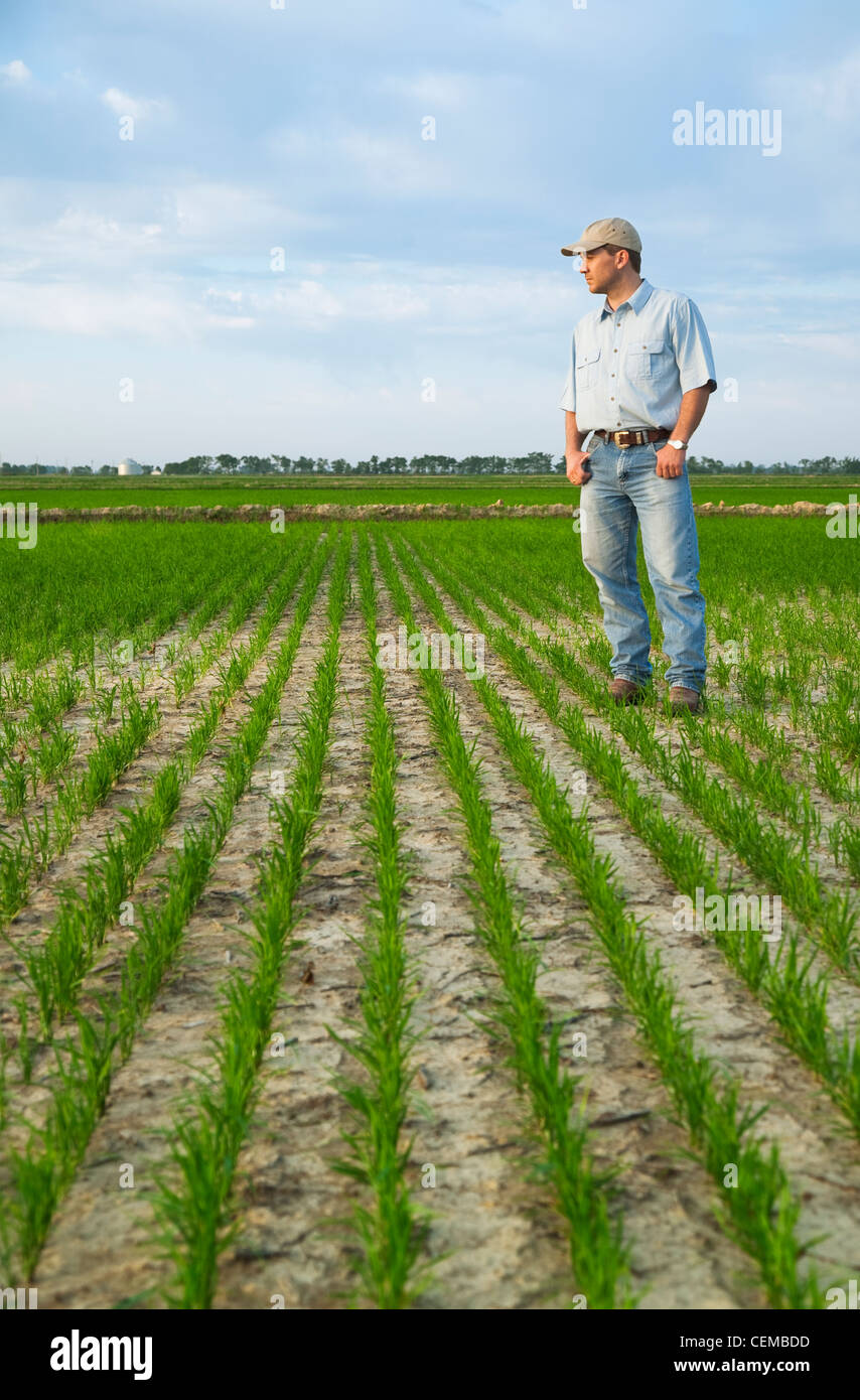 A Crop Consultant Standing In A Field