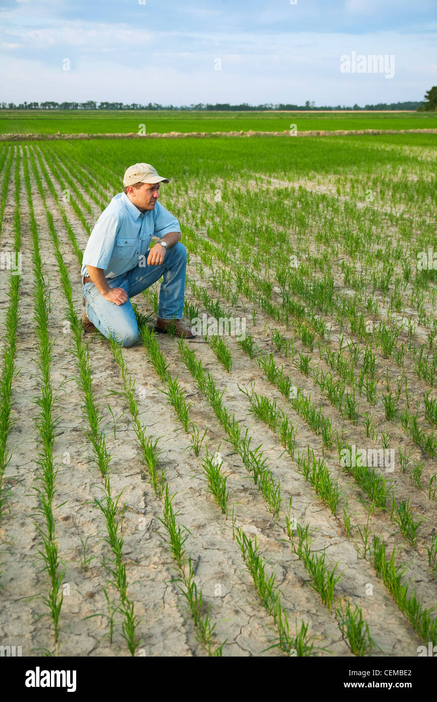 A Crop Consultant Kneeling Down In A Field