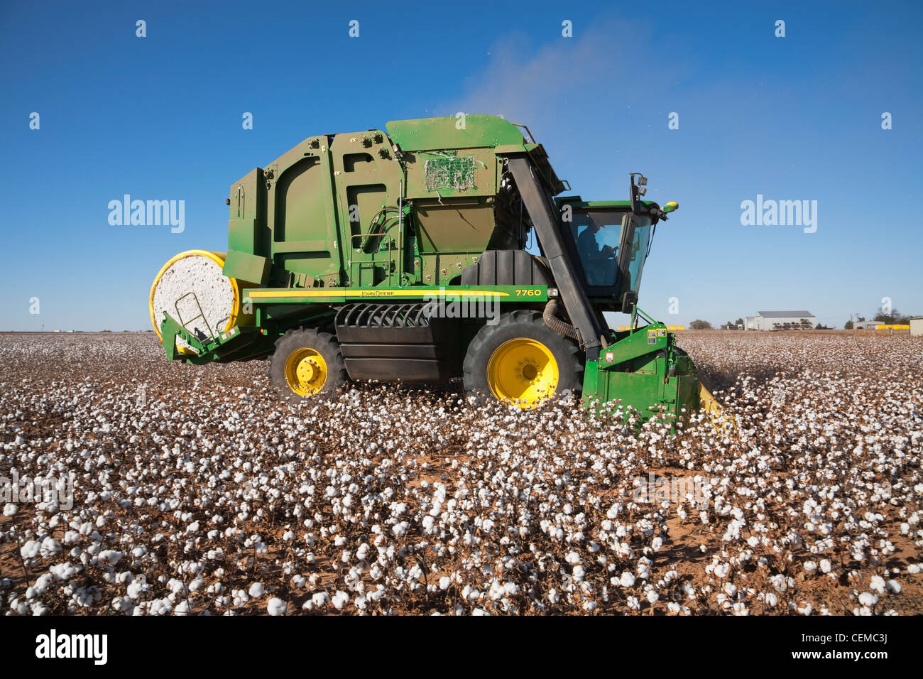Agriculture - A John Deere 6-row on board module building cotton picker harvests a mature cotton field / near Austin, - Stock Image
