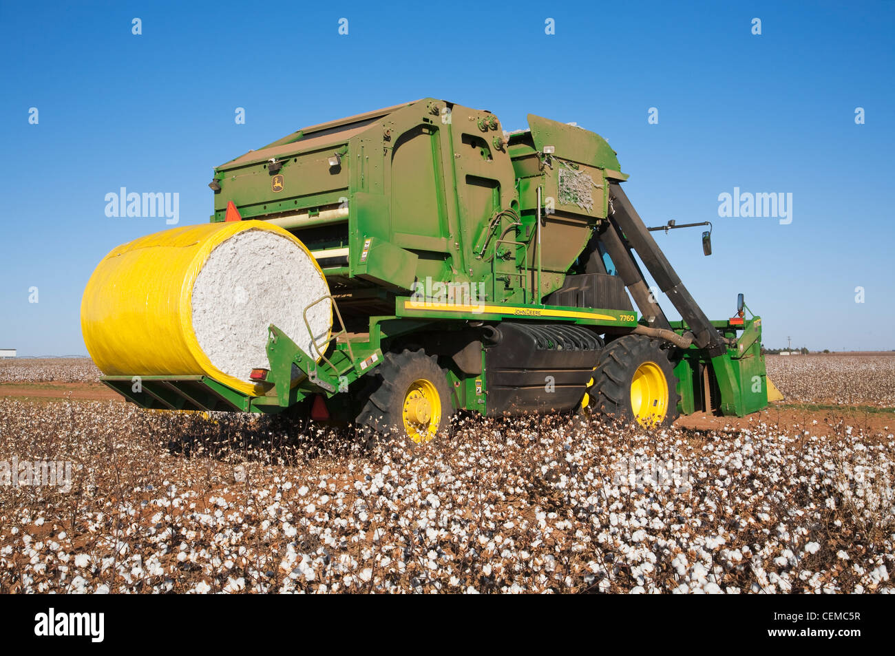 agriculture a john deere 6 row on board module building cotton picker harvests a mature cotton field near austin texas usa
