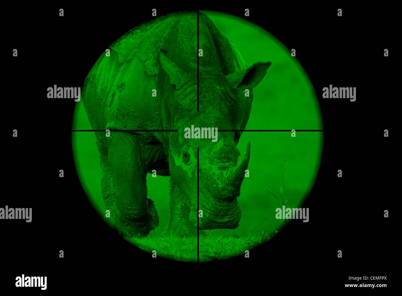 White Rhinoceros seen through a hunting rifle sight (illustration). - Stock Image