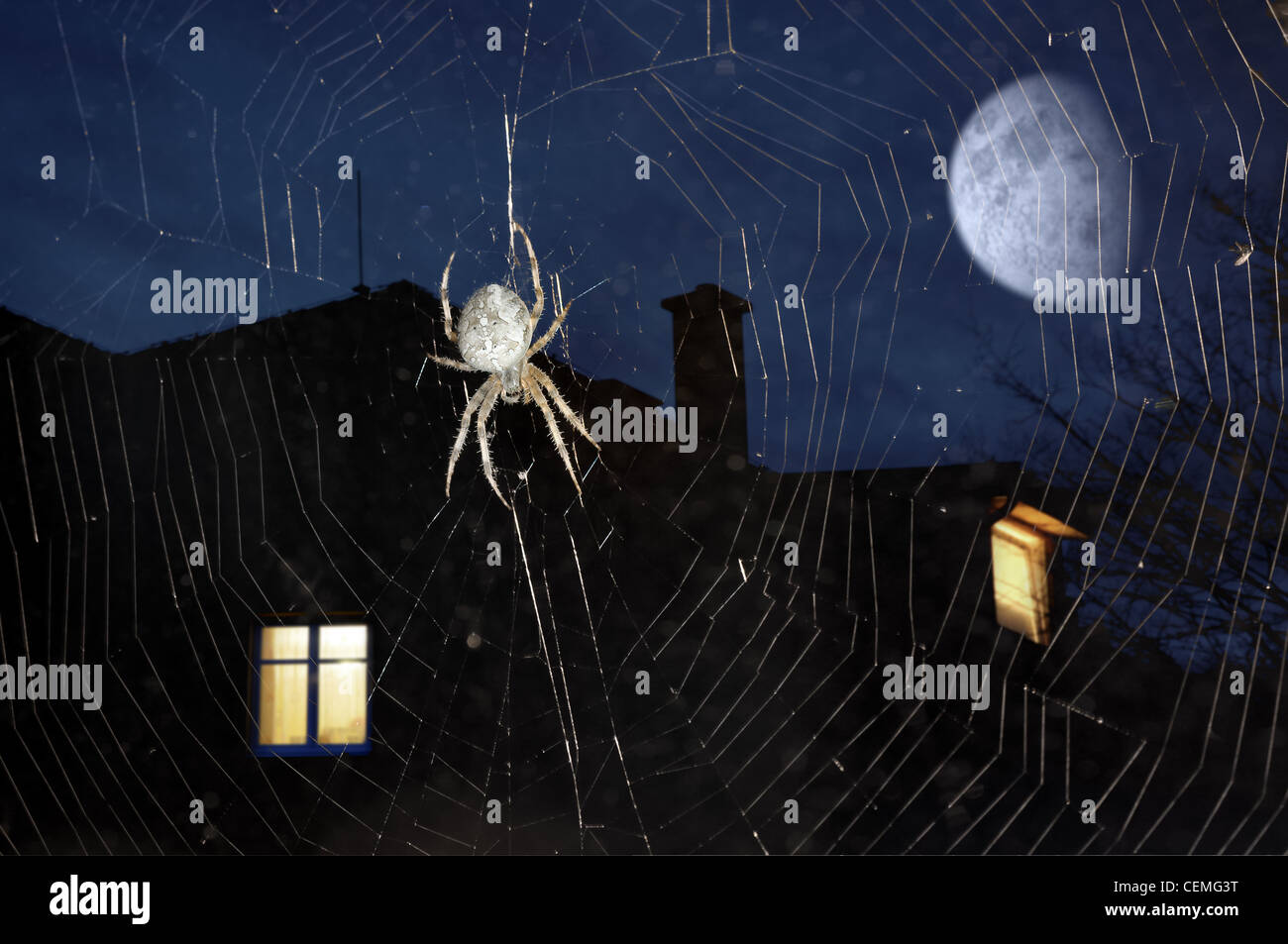 Spider on cobweb against night sky with urban buildings in the background - Stock Image