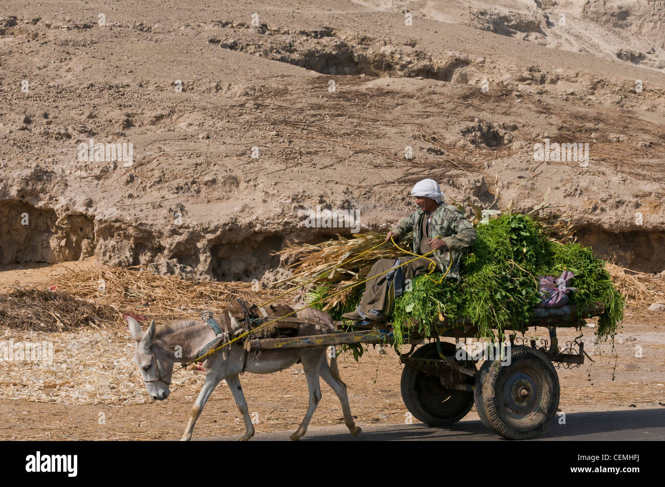 Peasant on carriage and his donkey Assiyut Egypt - Stock Image