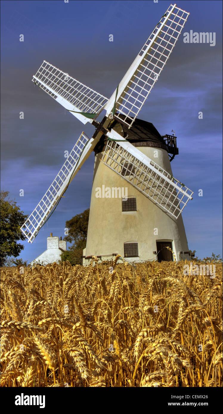 Field and Llynnon Windmill, Anglesea, Ynys Mon, Wales, Cymru Gymru, showing UK summer barley crop in field. - Stock Image