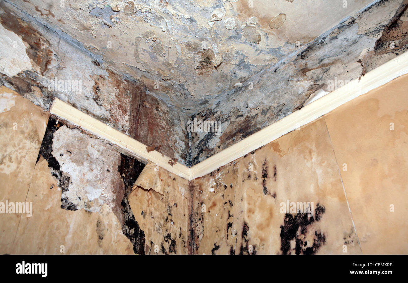 Damp damage on walls and ceiling. - Stock Image