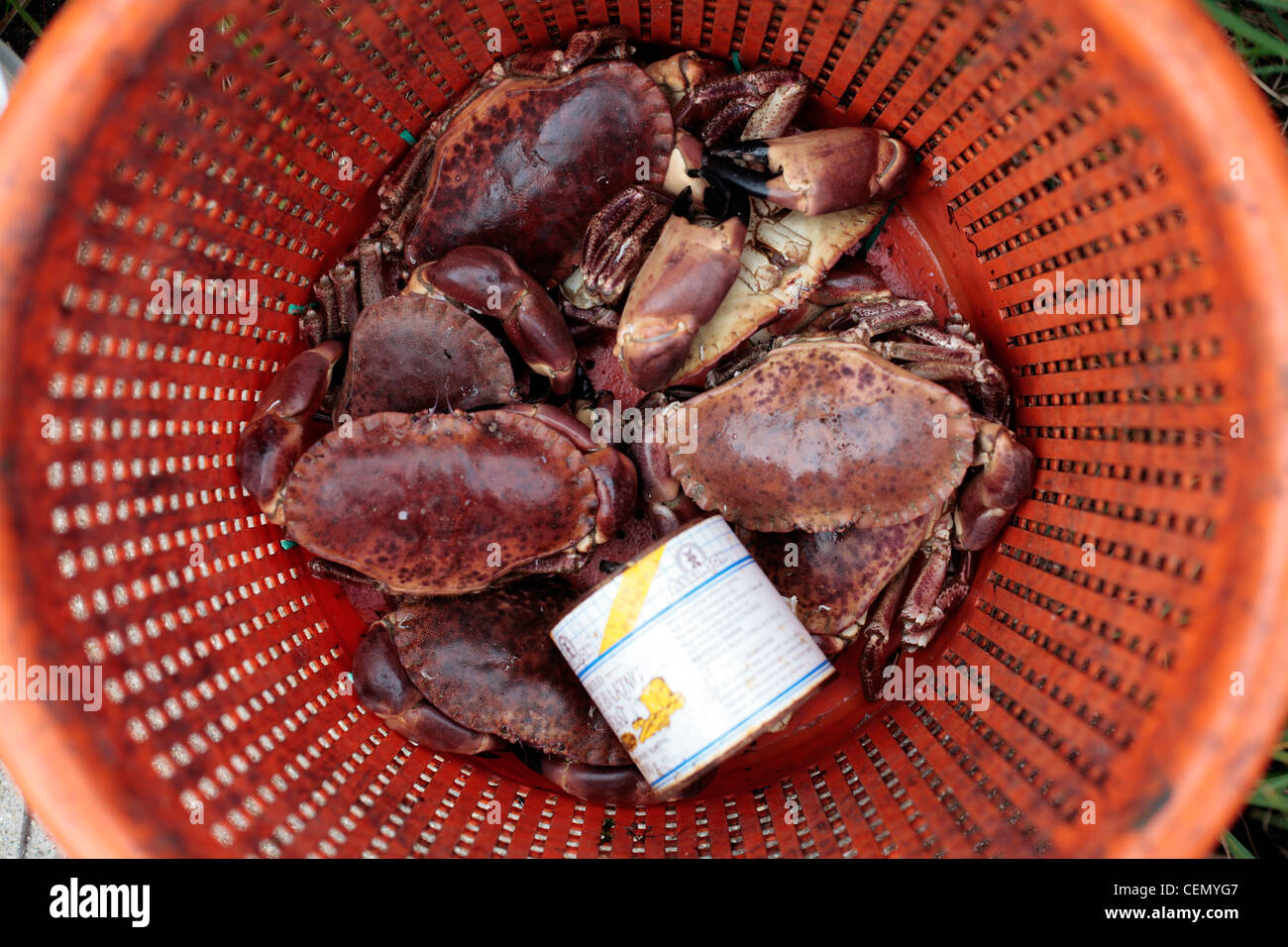 Crabs for sale on St Agnes, Scilly Isles, UK. - Stock Image