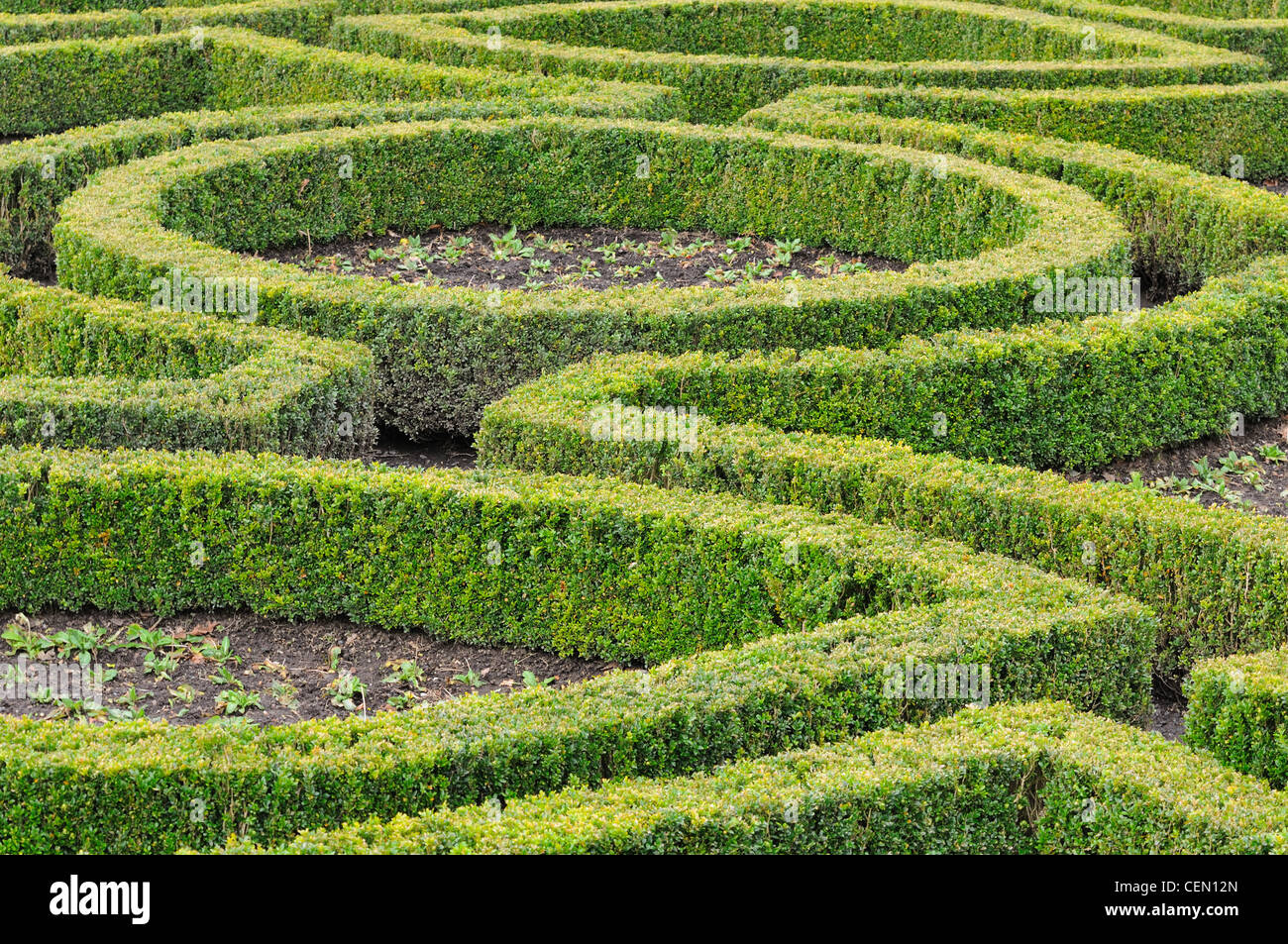 Formal garden box hedging layout at Pollok House in Glasgow, Scotland, UK - Stock Image