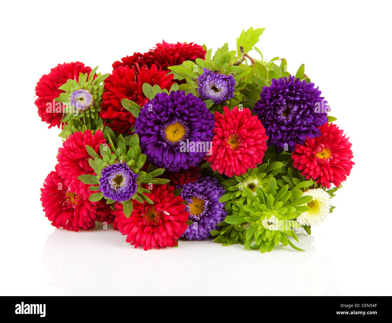 White Asters Stock Photos & White Asters Stock Images - Alamy