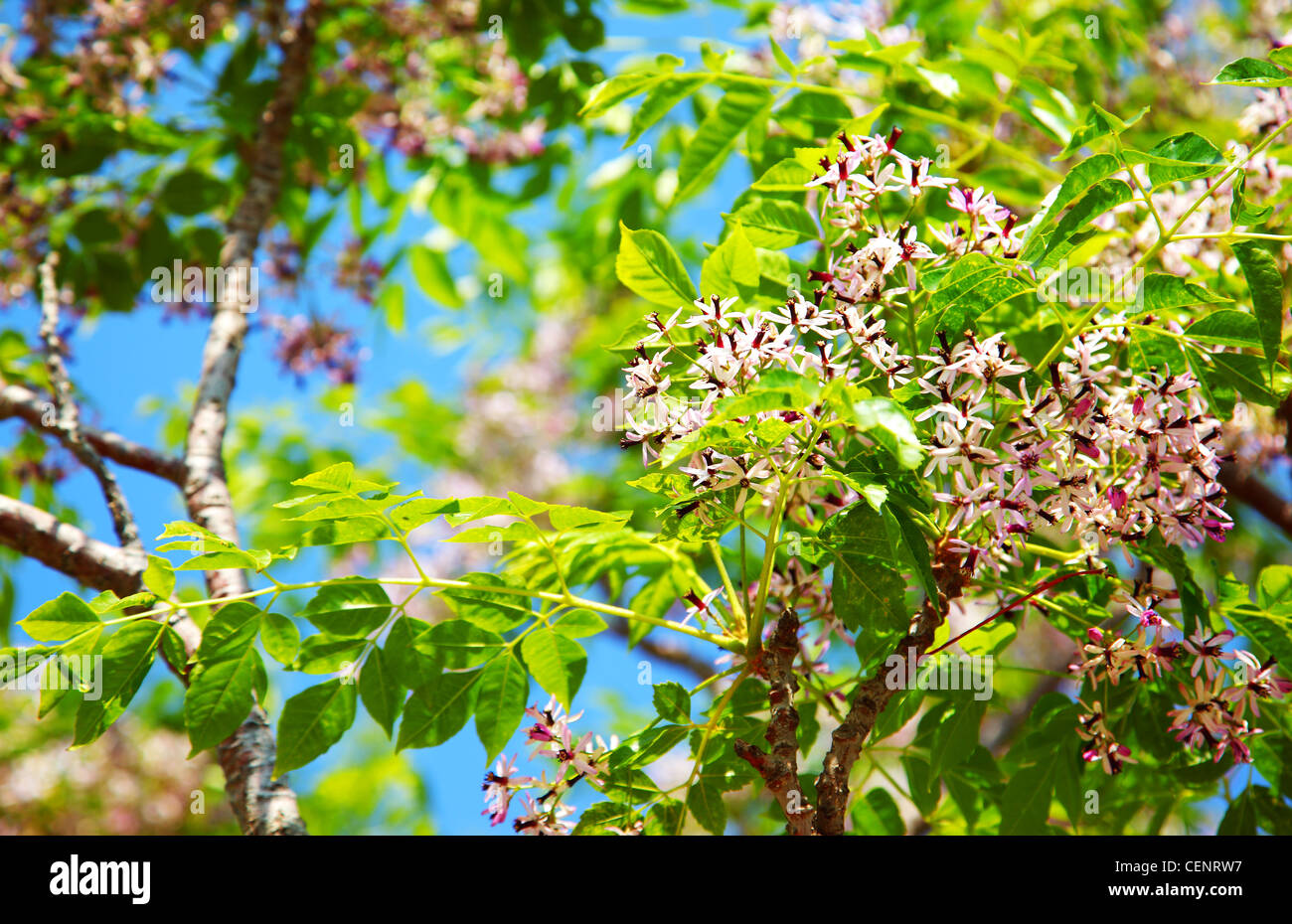 Fresh blooming flowers on the green tree, spring life in nature Stock Photo