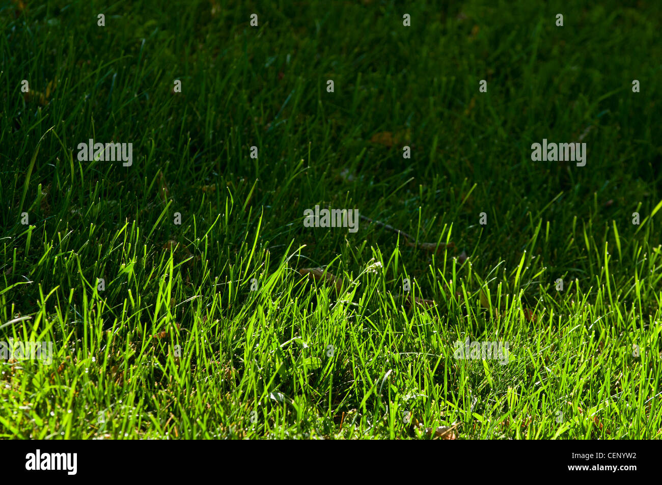 Grass Half In The Sun And Half In The Shade; St. Albert Alberta Canada - Stock Image