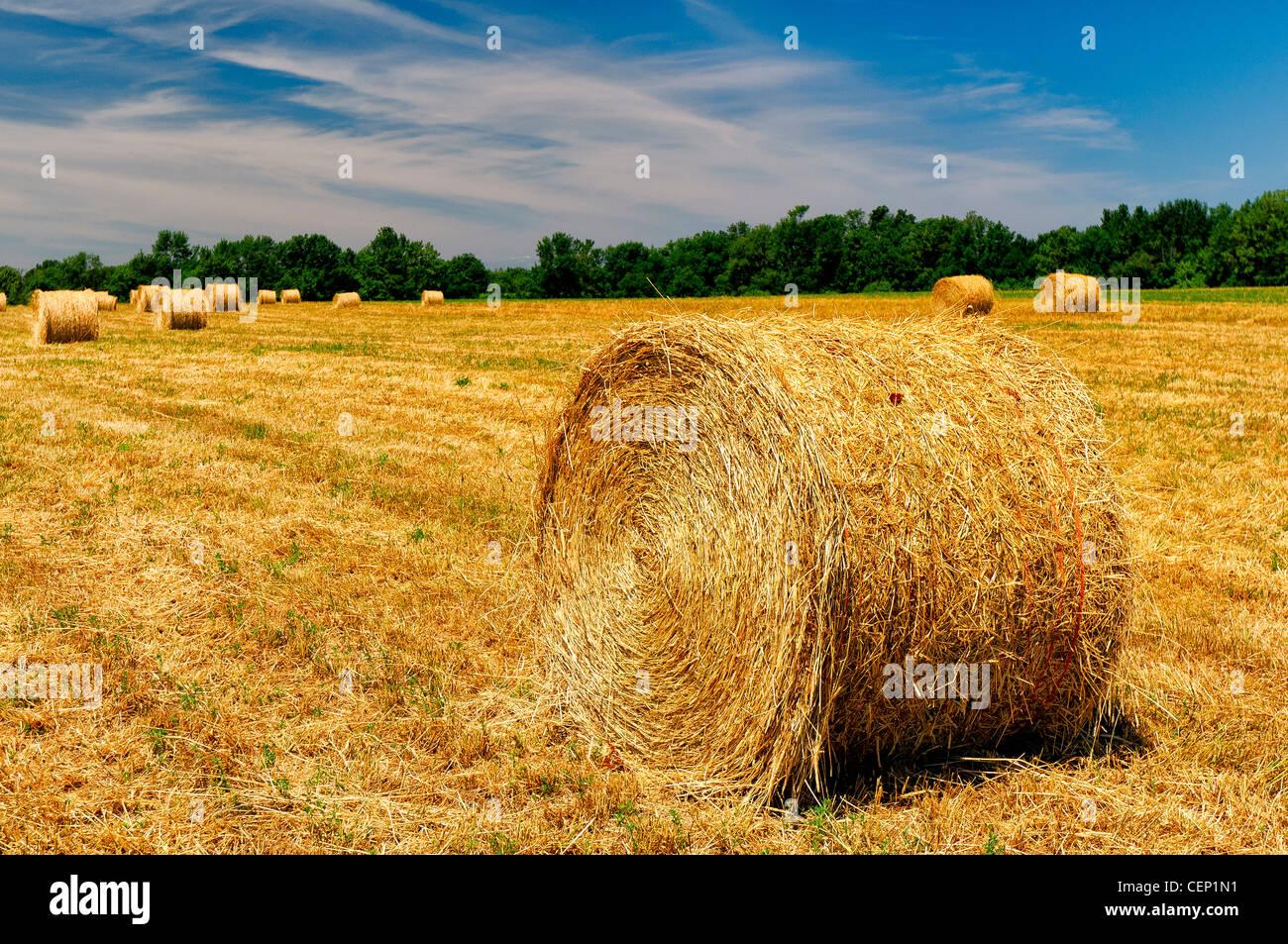 Bales of Hay in the Niagara Region, Ontario, Canada - Stock Image