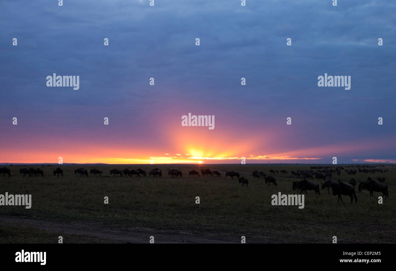 Kenya - Masai Mara game reserve -  Early Morning Sunrise Landscape - Stock Image