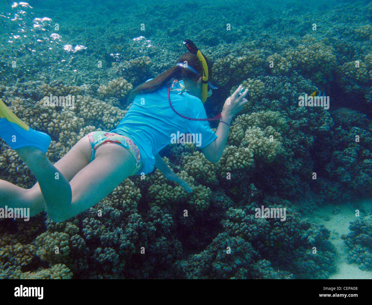 Young snorkeler photographing Double Saddle Butterflyfish, Malolo Lailai Island, Mamanuca Islands, Fiji, South Pacific - Stock Image