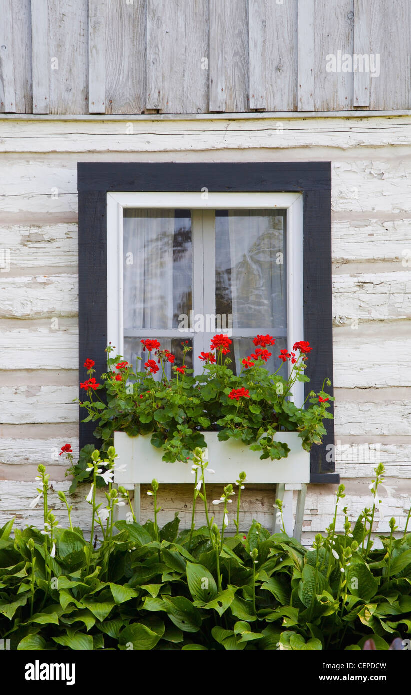 log home and flower box in the window; iron hill, quebec, canada - Stock Image