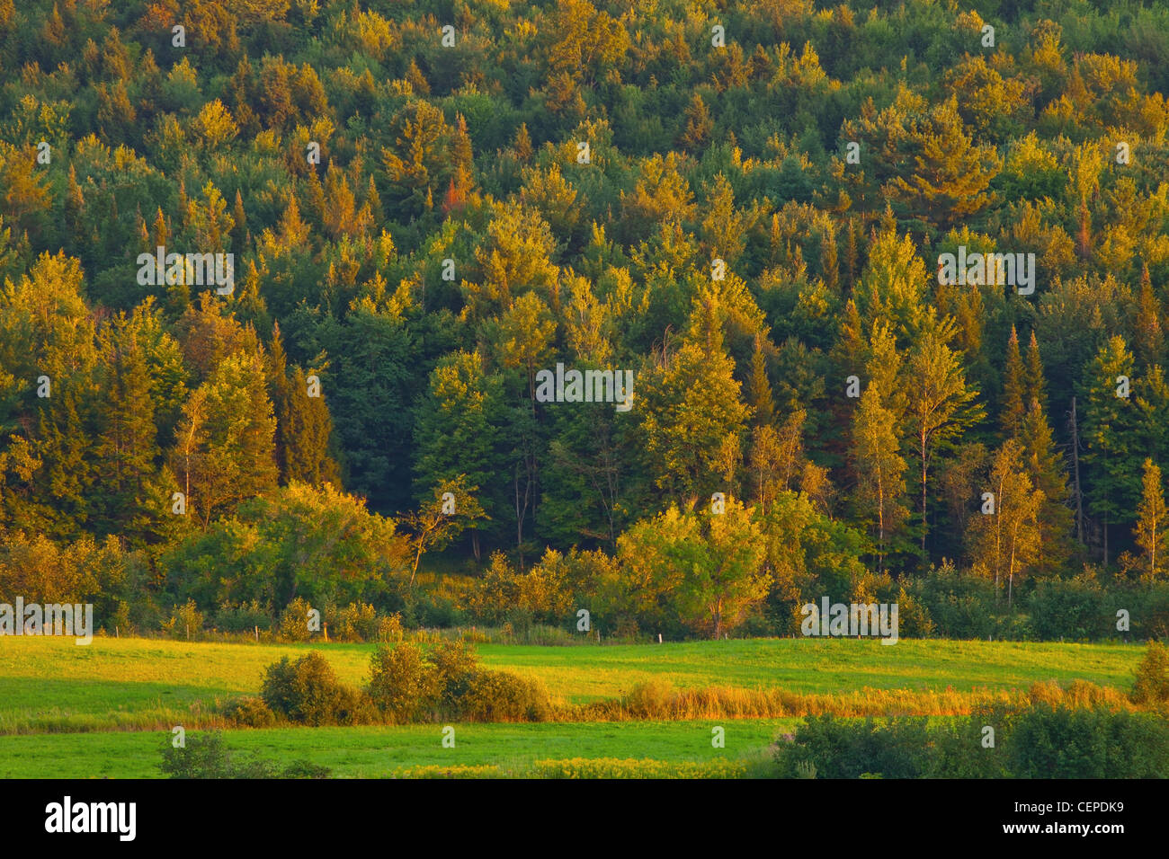 a forest in autumn at sunset; iron hill, quebec, canada - Stock Image