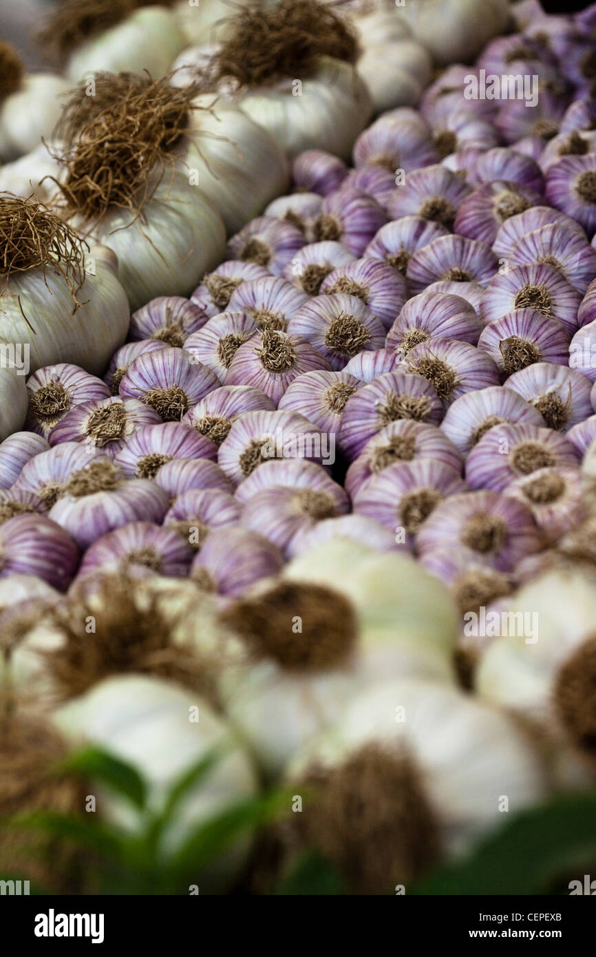 Gold winning garlic booth in Hampton Flower Show. Elephant garlic surrounds purple garlic - Stock Image