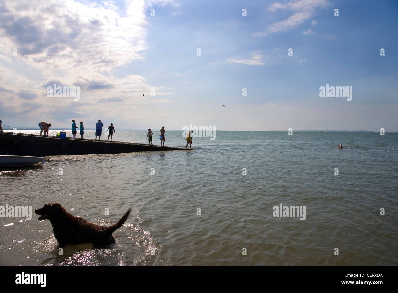 People and their pets enjoying the sea in the late afternoon at Whitstable. Stock Photo