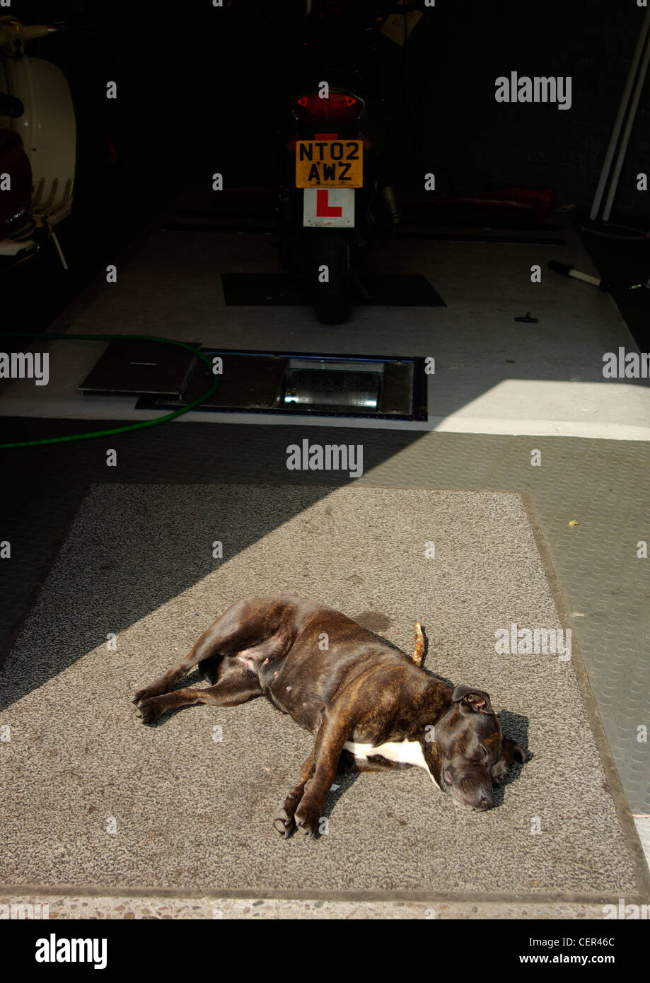 A dog sleeping in the sun at the entrance of a motor scooter garage. - Stock Image