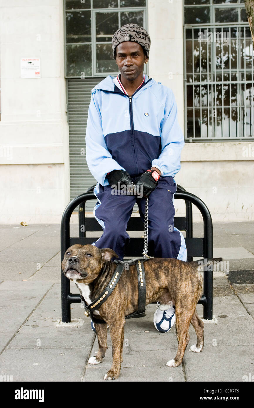 A man with his bull terrier. Staffordshire Bull Terriers are stocky, muscular dogs often referred to as 'keg - Stock Image