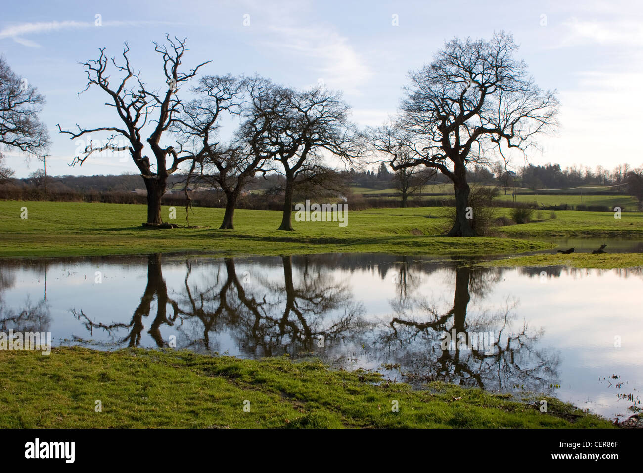Bare trees and flooded fields near Kemsing in Kent. - Stock Image