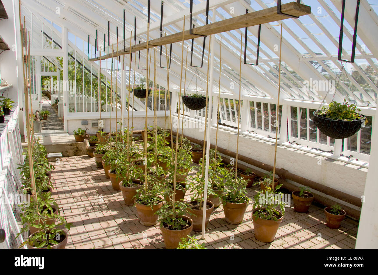 Interior of a greenhouse with potted plants in the Lost Gardens of Heligan in Cornwall. - Stock Image
