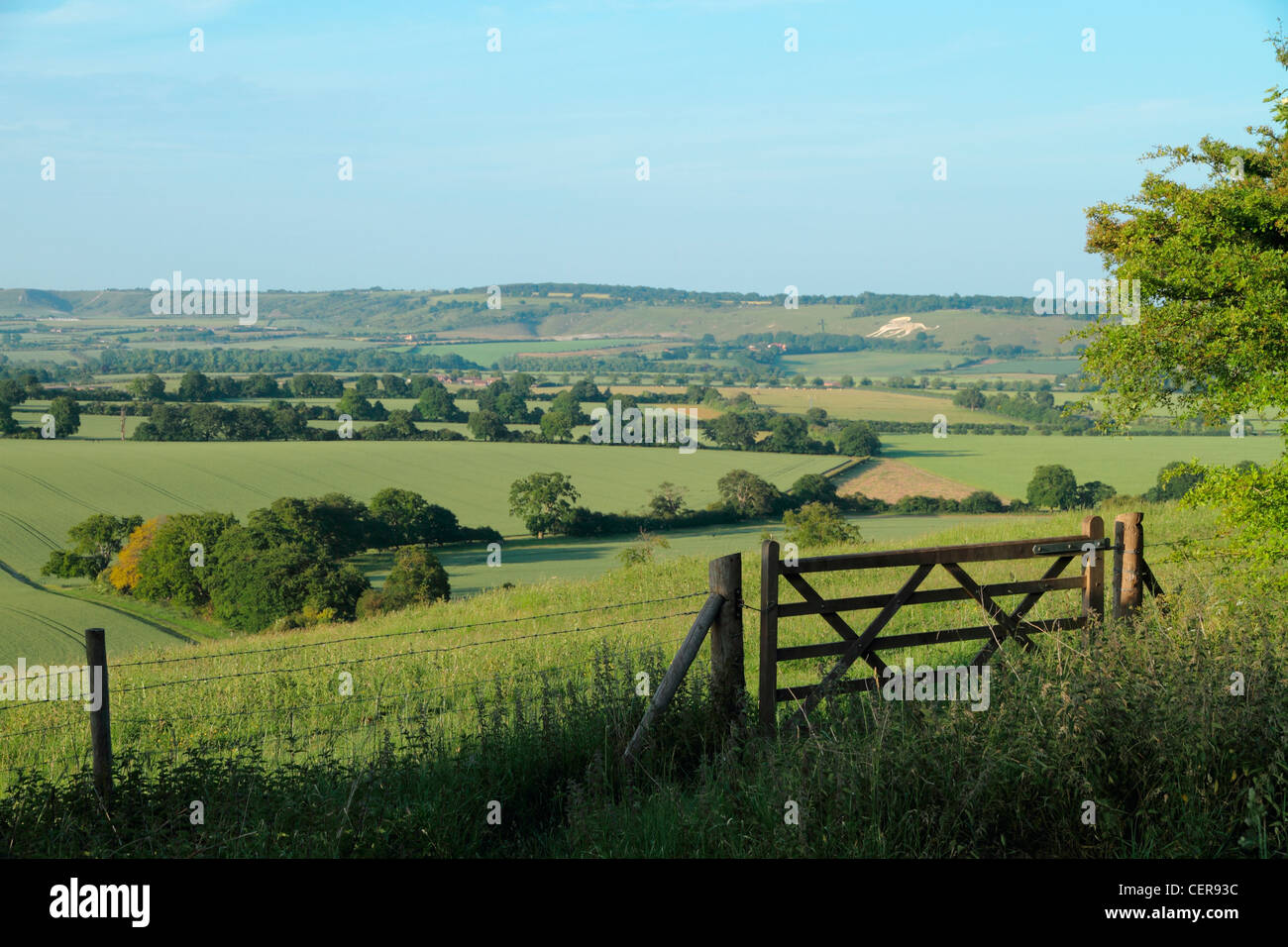 View across the Chiltern Hills towards a lion shape carved in the chalk hillside of Dunstable Downs. - Stock Image