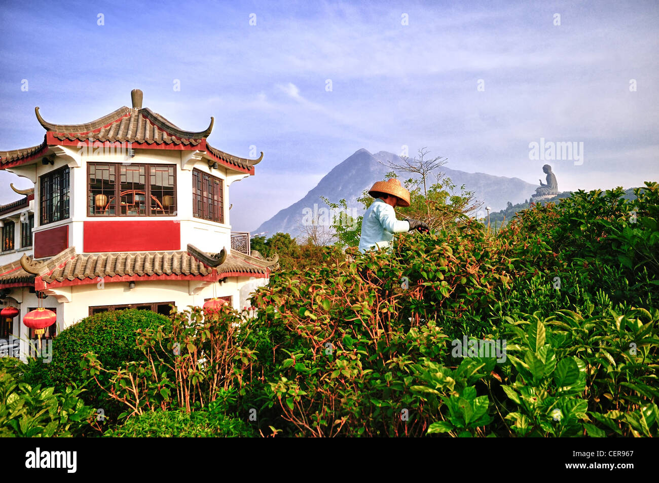 Worker Harvesting Tea overlooking the Lantau Peak and the Tian Tan Buddha - Stock Image