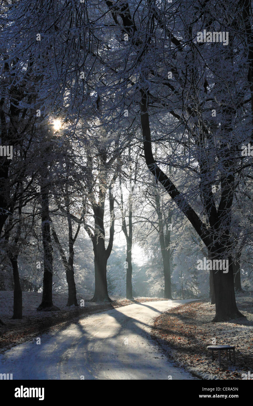 Sunlight shines through a frost covered trees at parkland in Kidderminster, Worcestershire, England, Europe - Stock Image