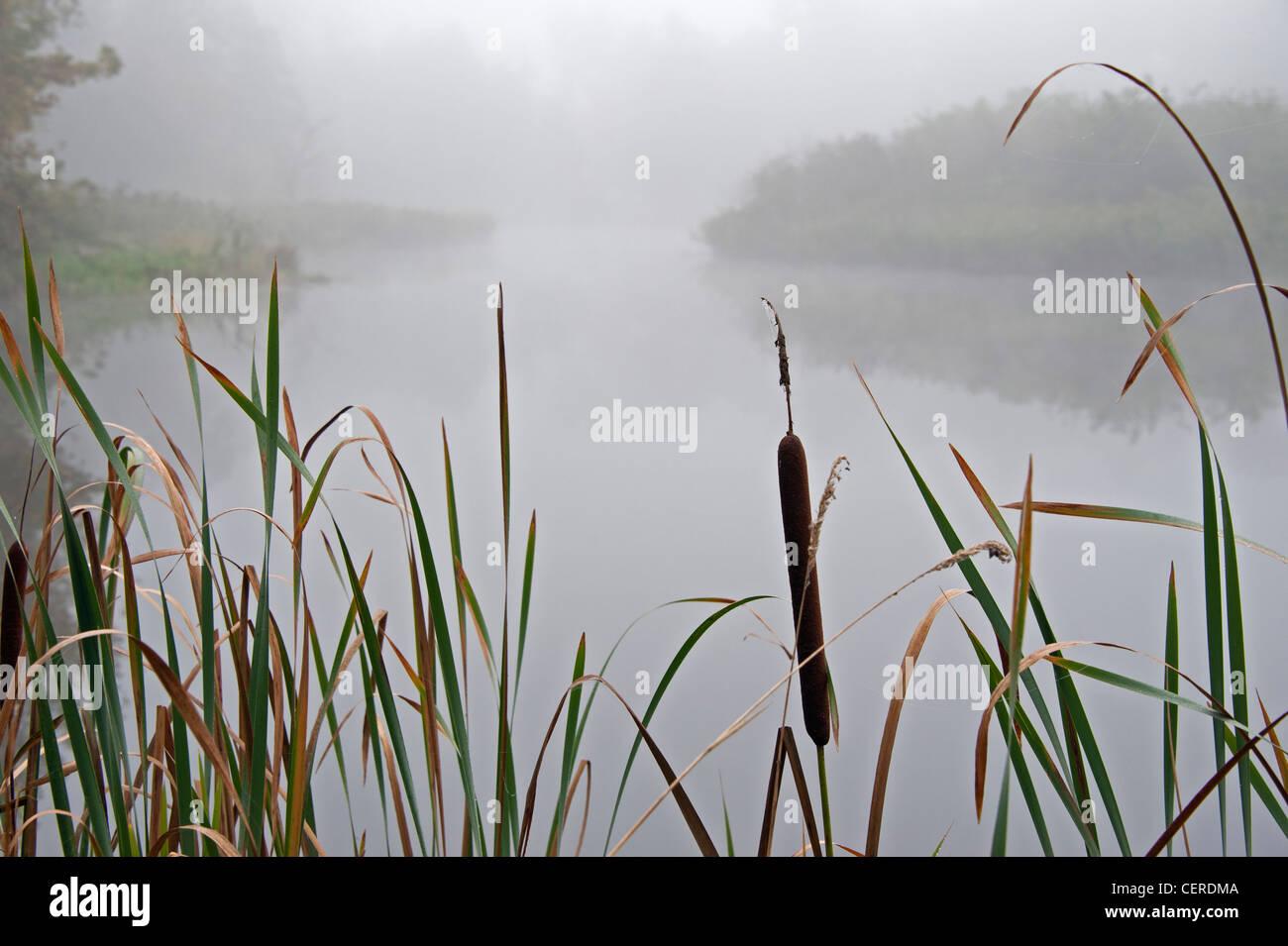 Walking near river Bug,Eastern Poland - Stock Image