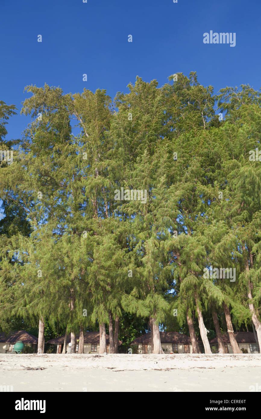 Bungalow resort under casuarina trees, Ko Lipe island, Thailand - Stock Image