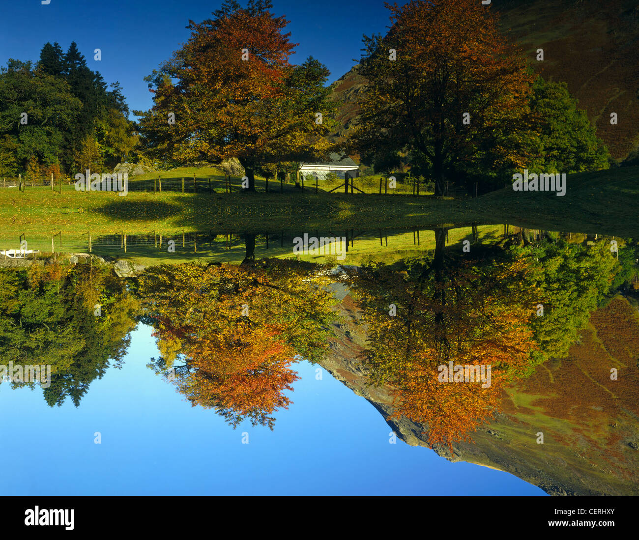 Autumnal colours reflected in a lake near Patterdale in the Lake District. - Stock Image