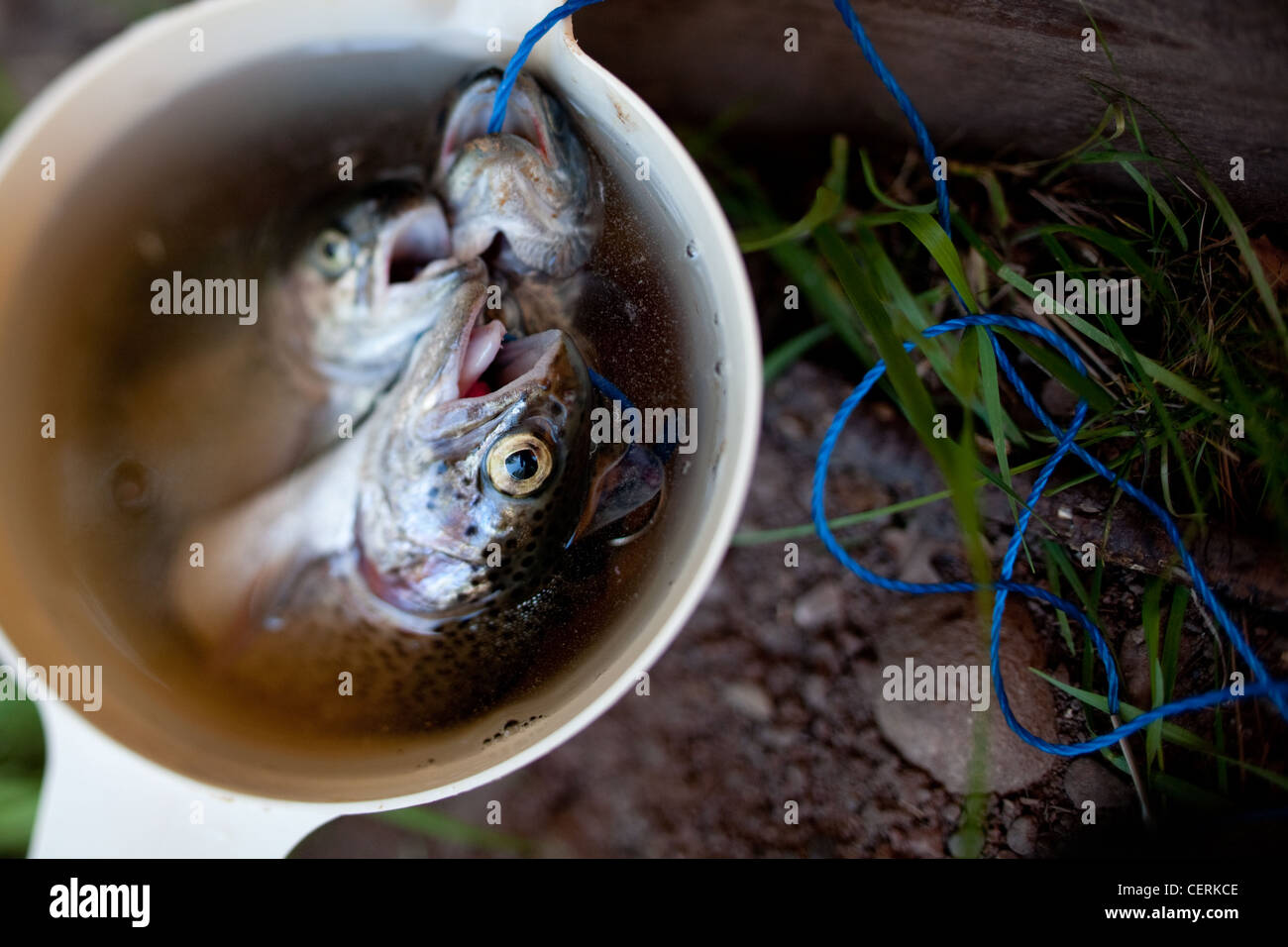 Fish caught and placed in a pitcher - Stock Image
