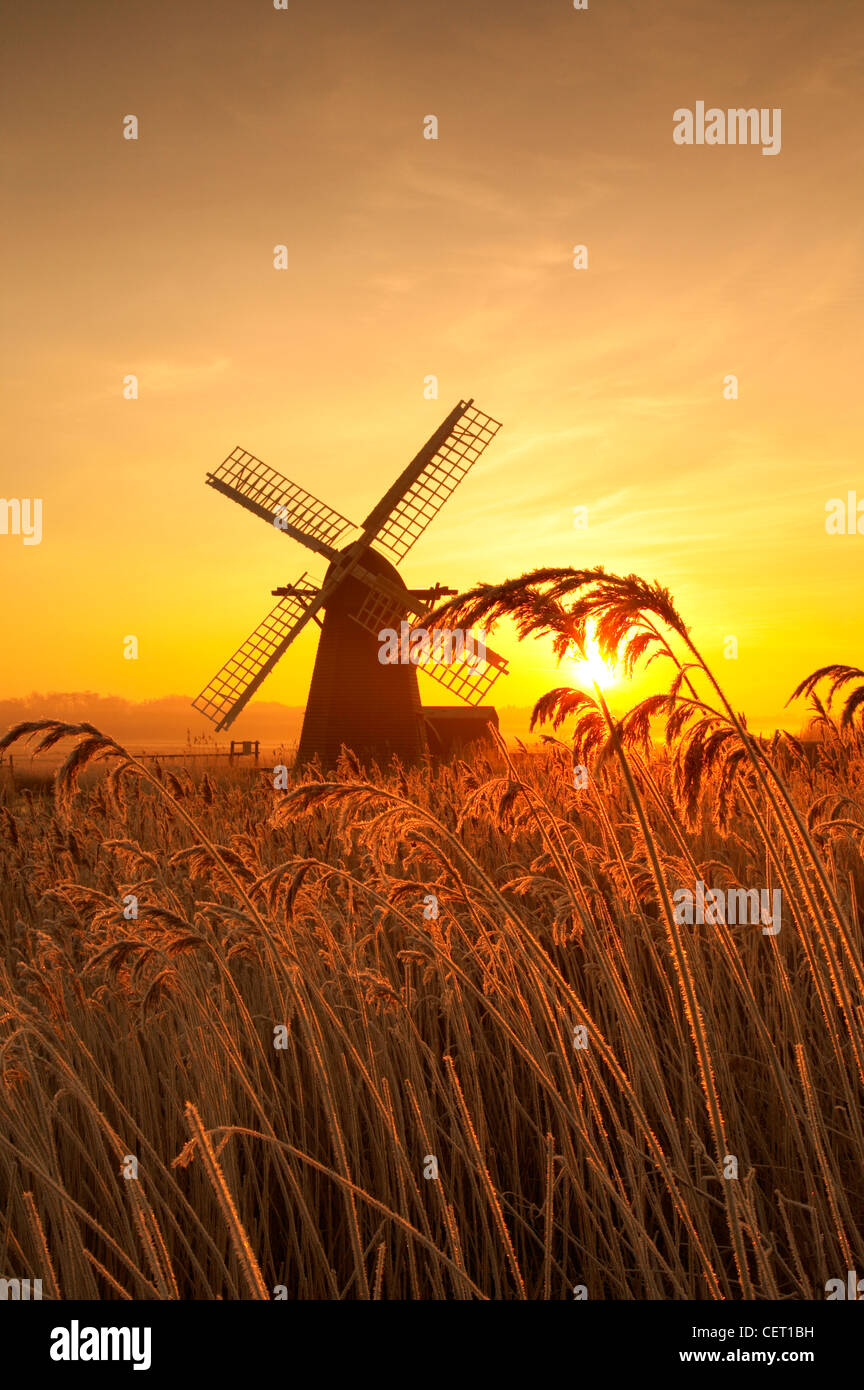 A misty sunrise over hoar frosted reeds and Herringfleet Windmill in Suffolk. - Stock Image