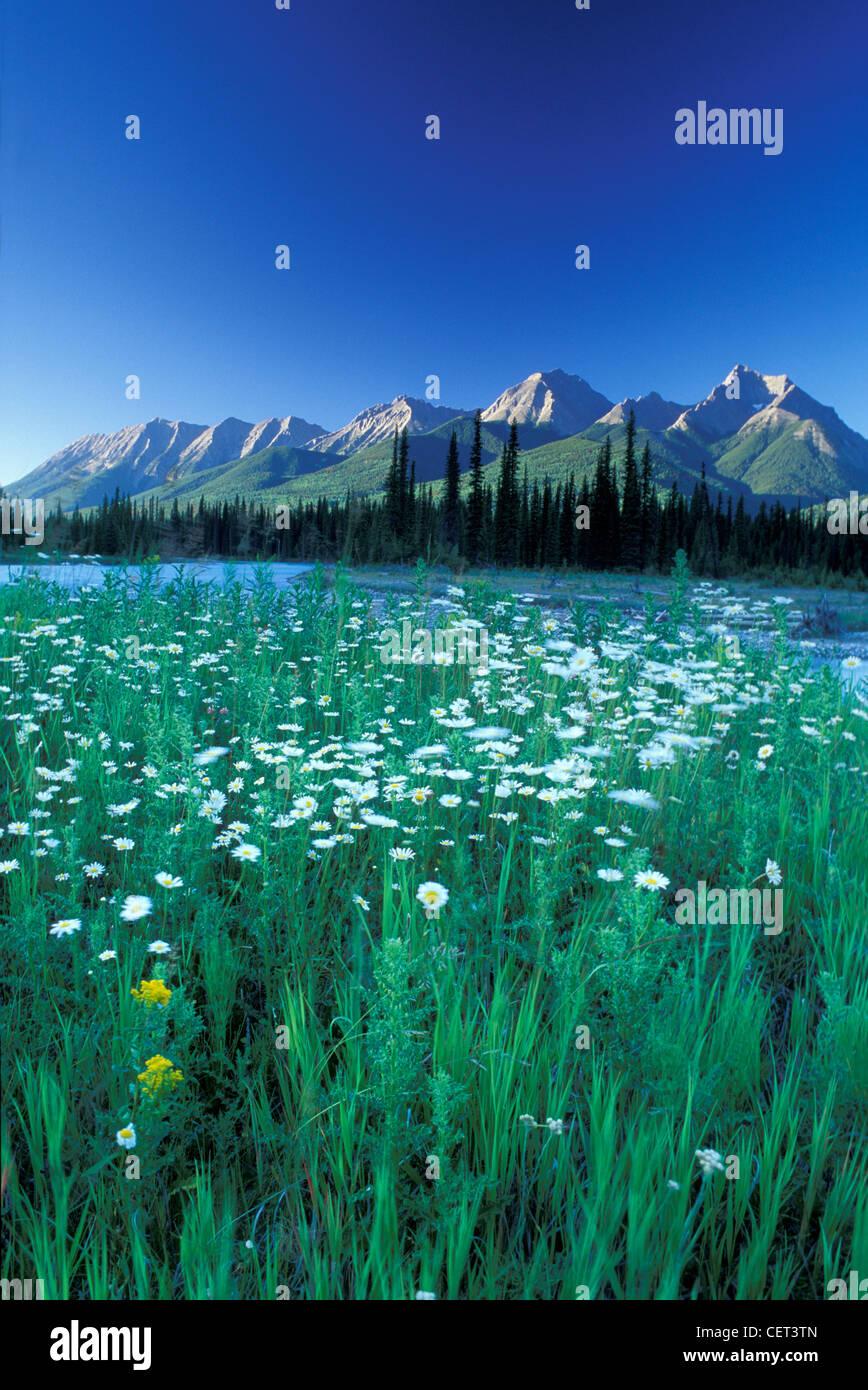 Kootenay River, British Columbia, Canada - Stock Image