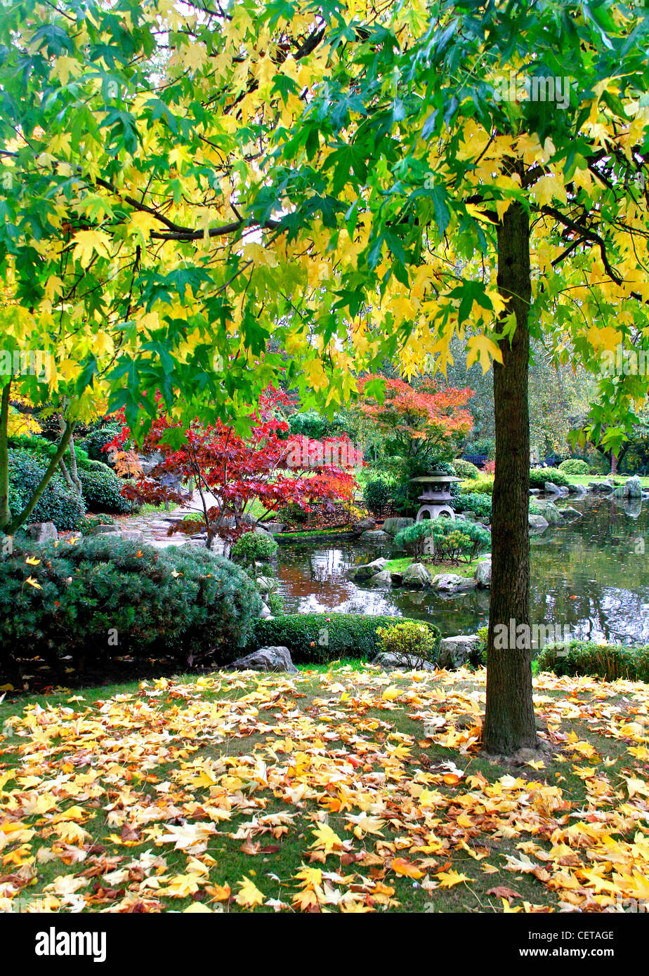Autumnal colours on display in the Kyoto Garden in Holland Park. - Stock Image