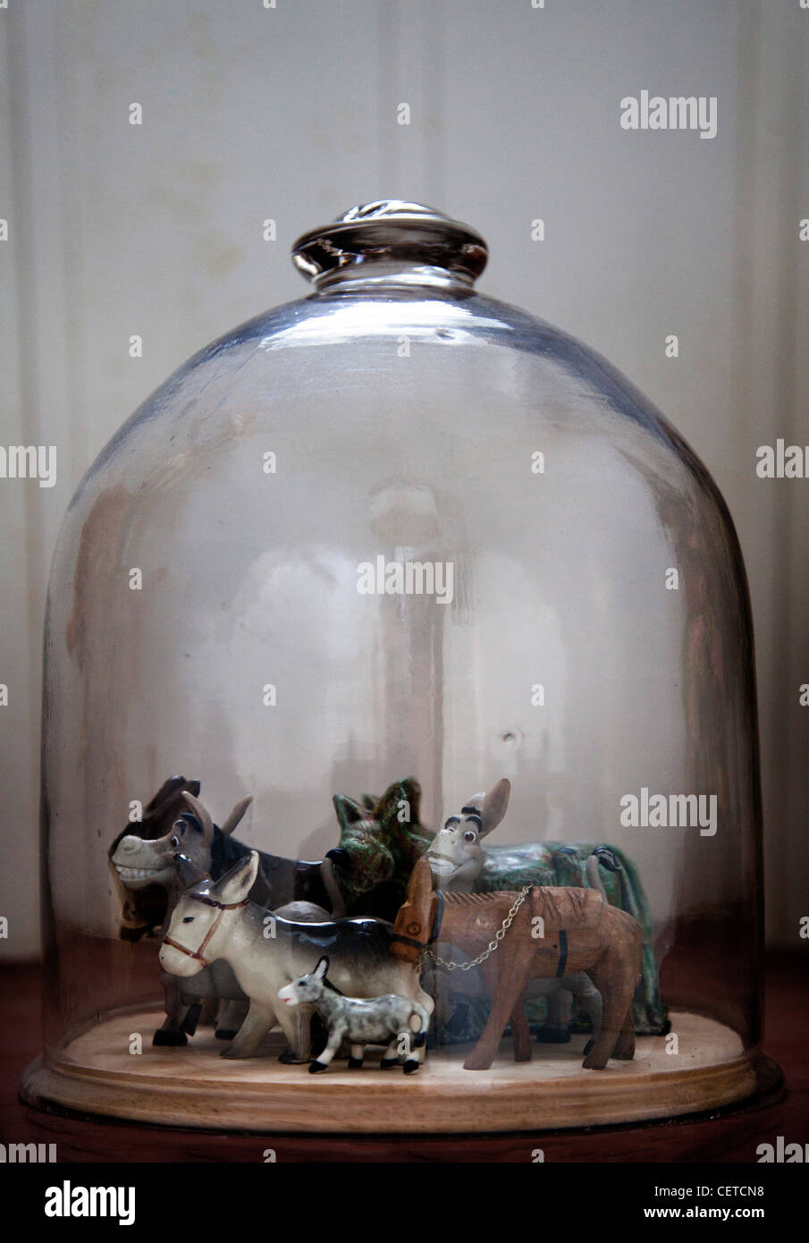 Donkey models in bell jar - Stock Image