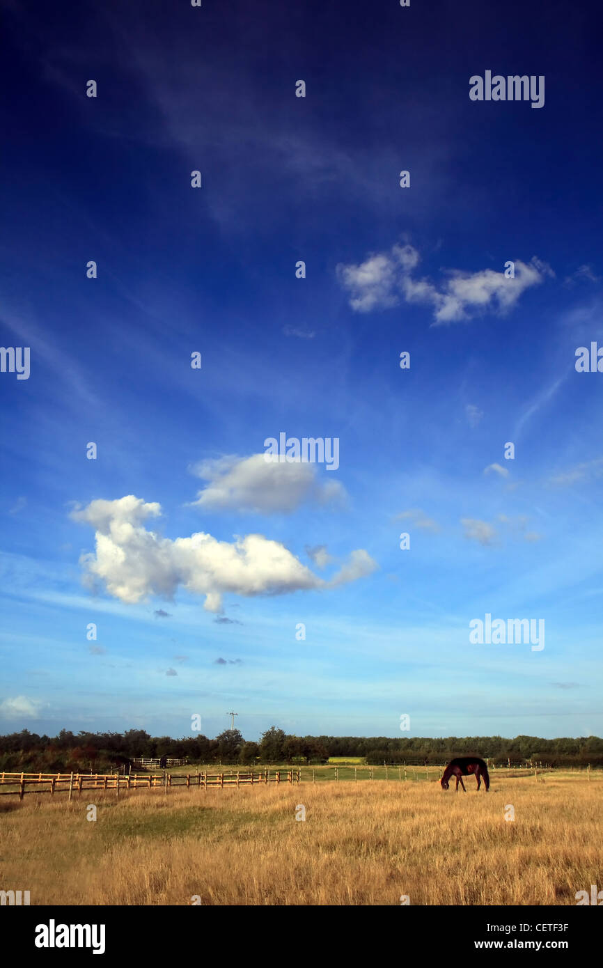 A horse grazing in a field under blue skies in East Yorkshire. - Stock Image